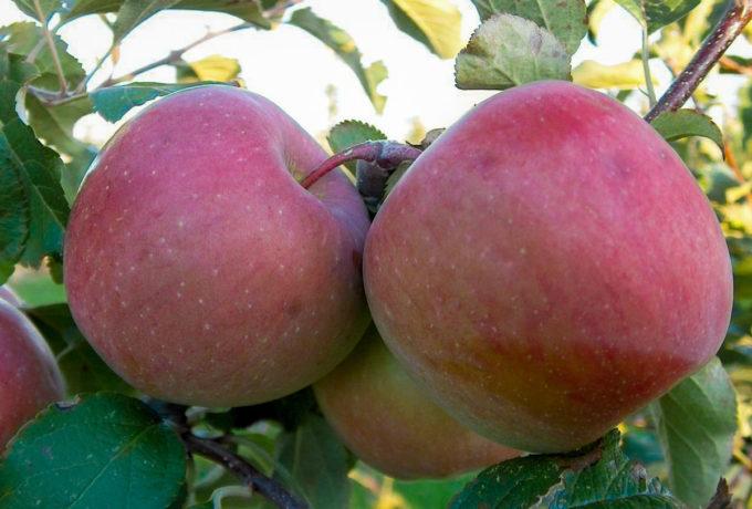 Fruit online bestellen