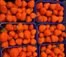 Hollandse aarbij online bestellen