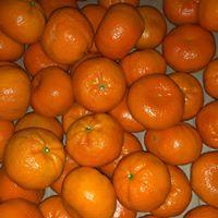 fruit online nestellen