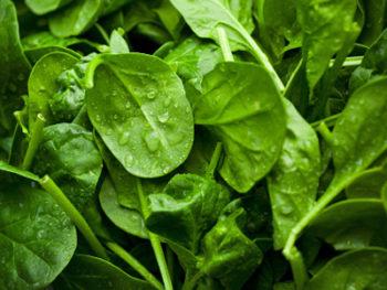 online groente bestellen
