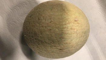 cantaloupe meloen online bestellen
