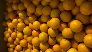 pers sinaasappel online bestellen