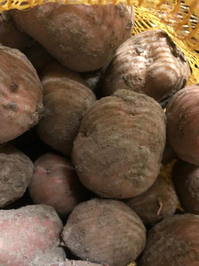 rode star aardappelen sally